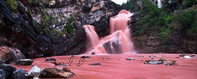 chute rose canada