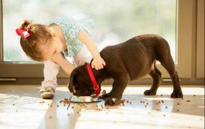 enfant 3 ans nourrir chien