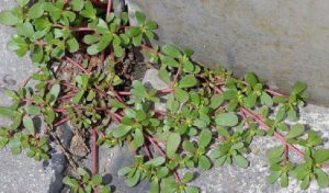 herbe cour attention astuce jardin