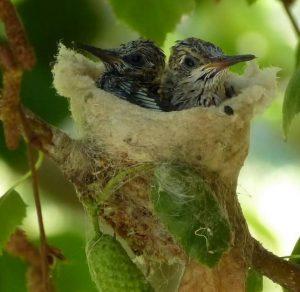 petit oeufs miniatures oiseau