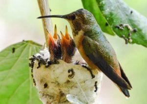 petit oeufs miniatures oiseaux