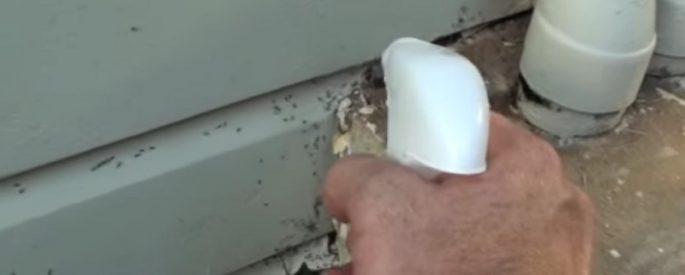 astuce fourmis jardinier solution
