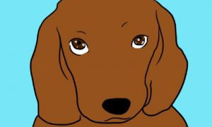 chiens yeux doux signification