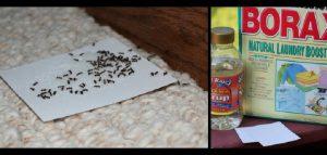 astuce fourmis repulsif se debarrasser
