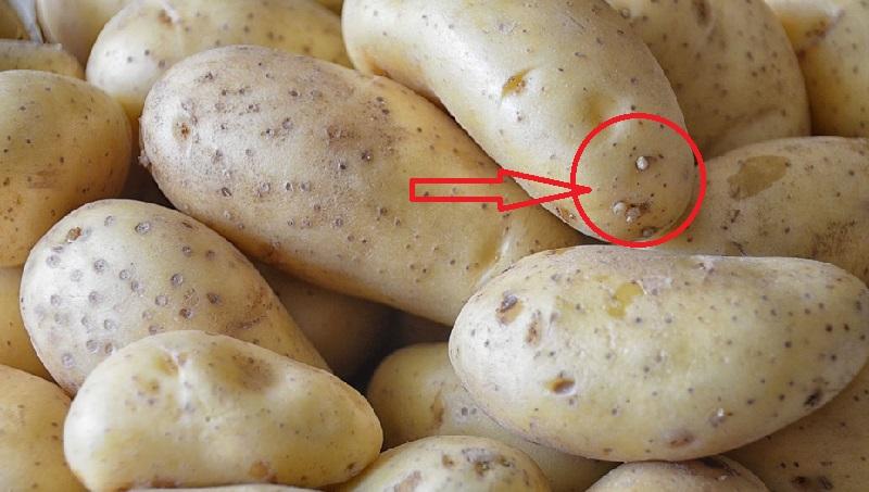 Une astuce g niale pour viter que vos pommes de terre germent trop vite bon savoir - Faire germer des pommes de terre ...