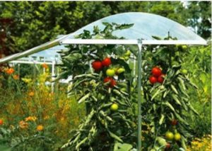 astuce toit pour tomate