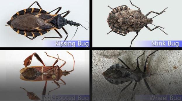 Si jamais vous voyez cet insecte dans votre maison sortez - Insecte dans la maison ...